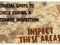 Crucial Spots To Check During A Termite Inspection
