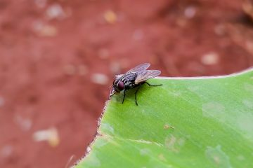 5 Key Pest Locations Around The Home